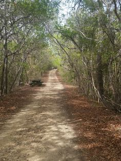Bosque Seco (Dry Forest),Guanica PR