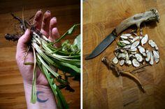 Six Herbs for Spirit Work | Sarah Anne Lawless