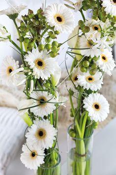 Wonderful white gerbera bouquets in a different size vases #whitegerberas #inspiration #colouredbygerbera #dutchgerbera
