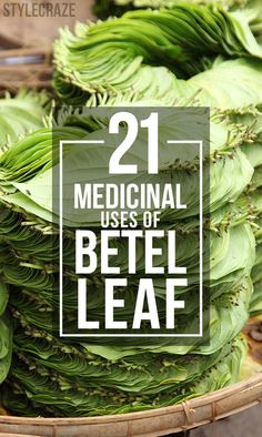 Did you ever think if betel leaves, which are so common in almost every household, have miraculous healing properties? Read 21 medicinal uses of betel leaf.