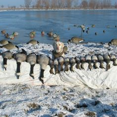 Goose Hunting pic - looks like an awesome day.