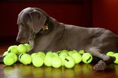 So many tennis balls....so little time.  Make your choice count.