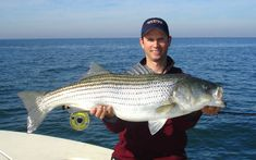 Striped bass on pinterest bass fly fishing and the fly for Striper fishing chesapeake bay