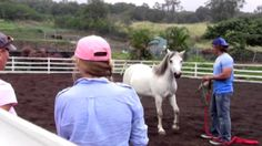 Eliza Wille - Eliza is talking about Animal Assisted Psychotherapies in Hawaii Island Recovery | www.hawaiianrecovery.com #horses #dolphins #animal #therapy