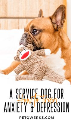 There are two types of service dogs. On one side are the dogs of assistance. They help blind people or warn of upcoming attacks of epilepsy so that their o Emotional Support Dog Training, Emotional Support Animal, Service Dog Training, Dog Training Tips, Therapy Dog Training, Service Dogs Breeds, Psychiatric Service Dog, Dog Anxiety, Psicologia