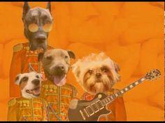 Shibbering Cheetos - We Rock!