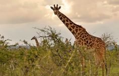 Masai Mara: the land of peril and beauty | Luxury Hotels Travel+Style