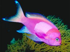 Welcome to Tropical Fish and Pets | Tropical Fish and Pets