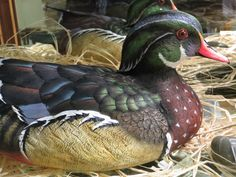 Wood Duck Carving.  Photo by Frederick Meekins