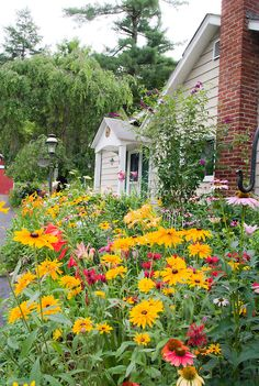 Lush perennial flower garden natives: Black eyed Susans Rudbeckias, Echinacea Coneflowers