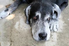 Let's Talk: When Is It Time to Say Goodbye to Your Dog? | Dogster