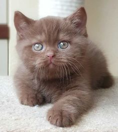 Cute Baby Cats, Cute Cats And Kittens, Cute Little Animals, Cute Funny Animals, Kittens Cutest, Cute Kitty, Pretty Cats, Beautiful Cats, Animal Original