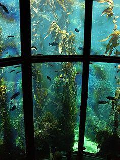 Monterey Bay Aquarium, Monterey, CA