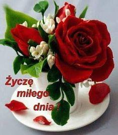 Rose, Floral, Flowers, Plants, Pictures, Facebook, Blog, Den, Polish