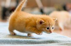 120606_kitten.jpg (500×325)