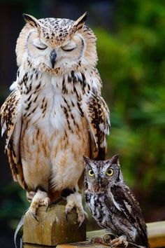 "Owls. ""I'm awake dad, whadarewegonnadonext???"" [and yes, I know they're actually different types of owls]"