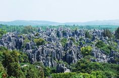 Stone Forest, Kunming had rock formations just like trees!