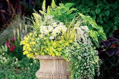Container Ideas: Perennials in Pots. birdsandblooms.com