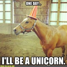 Unicorn. LOL  for some reason this reminds me of the time a very good friend of mine walked around wal-mart with a orange cleaning bucket on her head