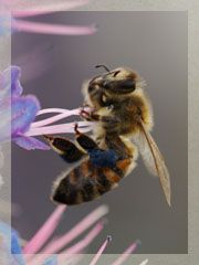 The Beekeeper Education and Engagement System (BEES) is a new online resource for beekeepers at all levels. The system is entirely internet based and open to the public.