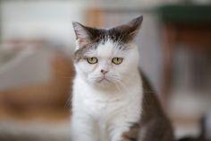 【有名猫さんに会ってきた!】 第一回:不思議顔の猫「まこ」編