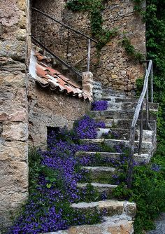 France ~ love the softness of the plants with the old stonework