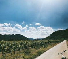 Biking through Wine country = College credits? You heard that right. Come to the Study Abroad Fair today on UWEC Campus!