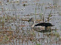 Nawabganj Bird Sanctuary - in Uttar Pradesh, India