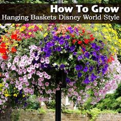 How To Grow Hanging Baskets Disney World Style