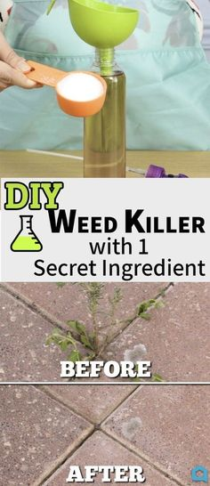 All Natural Weed Killer!! Recipe 1 Gallon Vinegar 2 Cups Epson Salt