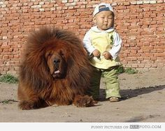 Tibetan mastiff & baby