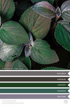 #colorlove #dblove Color Palette Color Palettes, Garden Inspiration, Color Schemes, Plant Leaves, Home And Garden, Gardens, Beautiful, Design, Colour Palettes
