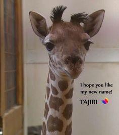 Angel 's new baby , Tajiri 2/5/'17 Barn Animals, Animals And Pets, Cute Animals, Beautiful Creatures, Animals Beautiful, New Baby Boys, Animal Kingdom, Pet Birds, Mammals