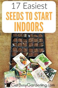 It's fun and rewarding to grow your own seeds for your garden! If you're new to growing seeds, it's best to begin with easy plants to grow indoors from seed. To help you be successful, check out this Easiest Flowers To Grow, Easy Plants To Grow, Growing Plants Indoors, Starting Seeds Indoors, Cool Plants, Growing Vegetables, Gardening Vegetables, Plant Seeds Indoors, Planting Seeds Outdoors