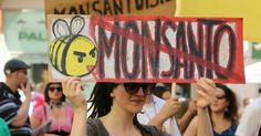 The Long March Against Monsanto: A Letter from The Hague | Common Dreams | Breaking News & Views for the Progressive Community