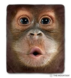 Daily tee: big face baby orangutan custom t-shirt design by Animal Pictures For Kids, Cute Animal Videos, Cute Baby Animals, Funny Animals, Viernes Friday, Monkey Wallpaper, Monkey T Shirt, Big Face, German Shorthaired Pointer