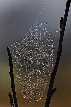 Interesting web