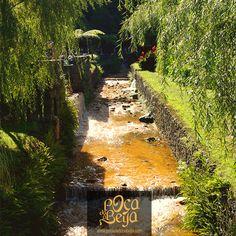 #poçadonabeija #furnas #azores #azoresislands #portugal #nature #vacations #thermal #spa #pocadadonabeija #hotsprings #pool