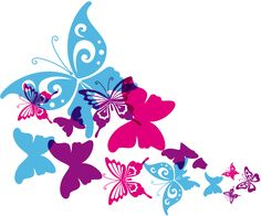 Infographics about Butterfly | Venngage - Free Infographic Maker