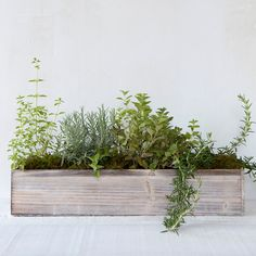 Rustic, natural wood welcomes a planting of lush greens in this trough for indoor gardens.- box  Wood- Indoor use only- Drainage hole not included- Imported $28