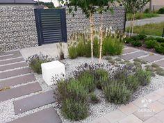 Put lavendar in a rock garden.