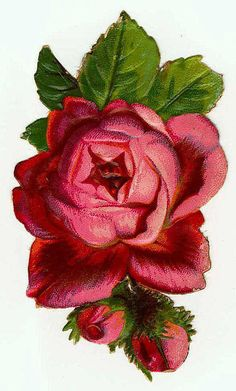 Victorian Rose in red
