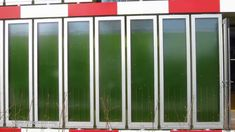 How Algae feed a House - YouTube