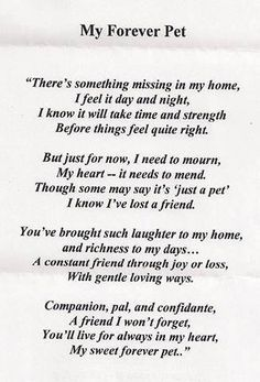 Loss of a pet it is so easy to feel alone and as though you are the only person who has ever felt like this or. Write from the heart. 13 Dog Loss Quotes Comforting Words When Losing … Losing A Pet Quotes, Dog Loss Quotes, Pet Quotes Dog, Losing A Dog, Animal Quotes, Dog Sayings, Wise Sayings, Pet Loss Grief, Loss Of Dog