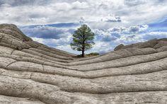 1920x1200 Geral árvores paisagem natureza céu nuvens