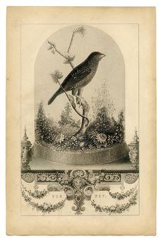 Vintage Printable - Breathtakingly Beautiful Bird in Cloche - The Graphics Fairy**photo in a mason jar
