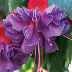The plants you'll want to grow this year, plus great gardening ideas from our 2012 edition