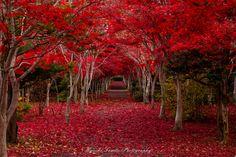 撮影場所 Kiyota Ward, Hokkaido, Japanで11月に撮影された写真 climax : パシャデリック