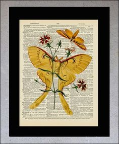 Entomology Butterfly Luna Moth Dictionary book by OnceTattered, $10.00