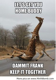 drunk giraffe | Drunk giraffe | Funny Pictures, Funny Images